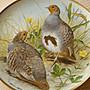法國 Limoges 利摩日 世界的鳥類 24K金邊裝飾收藏盤 a