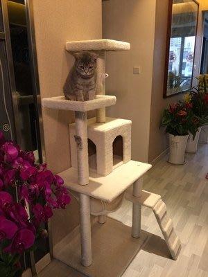貓爬架貓窩貓抓板貓樹貓房子貓跳台貓貓玩具YS