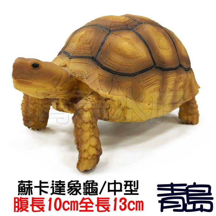 Y。。。青島水族。。。A6中國NOMO諾摩---仿真陸龜模型 3D擬真模型 烏龜/陸龜公仔==蘇卡達象龜/中型