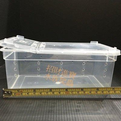 (小)飼養盒 飼養箱 守宮 角蛙 蜘蛛 昆蟲 蛇 爬蟲 蝎子 蜥蜴 烏龜 獨角仙 窩 寵物 盒 缸 箱 爬箱 隔離 活餌