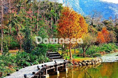 想租多少價格.你決定專案.湖泊落羽松.台灣圖庫.照片.圖片.風景.影像168MB超級大檔