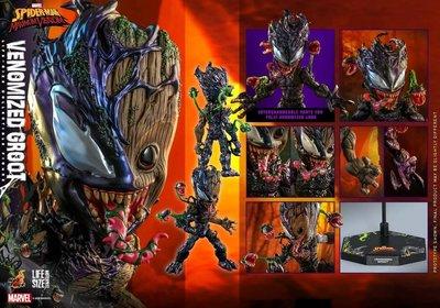 《瘋樂模玩》預購22年第一季 Hot Toys LMS014 蜘蛛人:極限猛毒 猛毒格魯特  訂金1500尾款5800