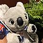 澳洲無尾熊娃娃- (強壯版)澳洲製造...