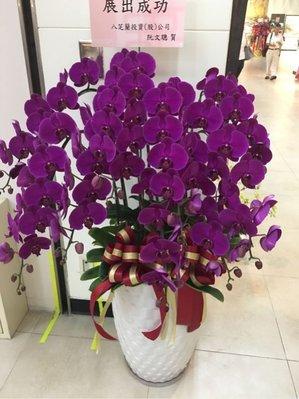 優質蘭花12珠/專送世貿一二三館/信義區花店