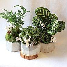 綠植星球,擴香盆栽「原生態工作室」