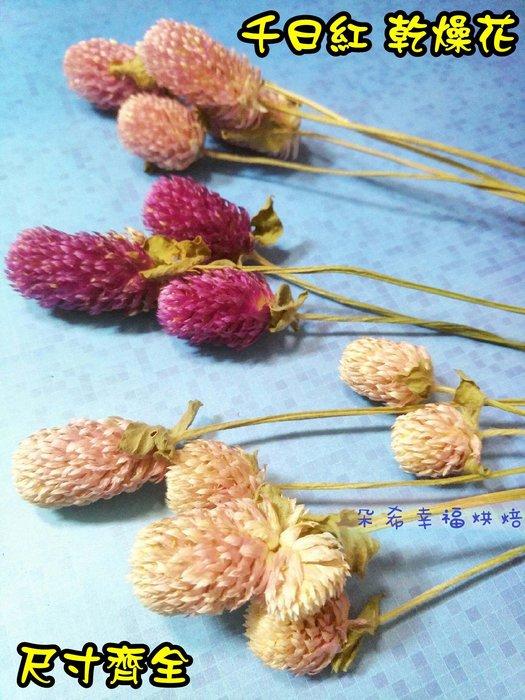 3色  千日紅 乾燥花 L號 手工皂香磚 圓仔花 乾燥花素材 薰香蠟燭 DIY 乾燥花材 乾燥花束 朵希幸福烘焙