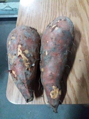 水林新鮮台農66號紅肉地瓜大條,保證好吃保證甜,6斤165元