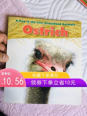 非洲草原動物鴕鳥 Ostrich (Day in the Life. Grassland Animals