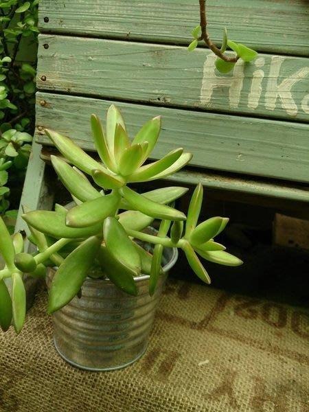 【日花里的花園】 日本進口 自然 鄉村 手作 雜貨風 馬口鐵螺紋花器