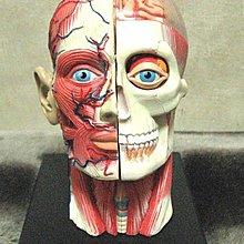 [狗肉貓]_人形頭與大腦裝置藝術玩具