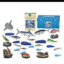日本 COLORATA 海水魚 扭蛋set 全15種