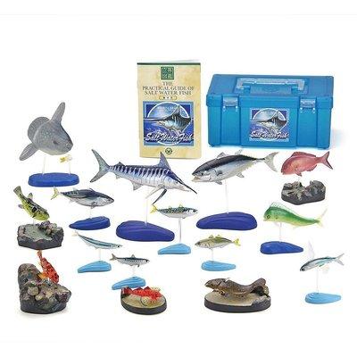 日本正版 立體圖鑑擬真模型BOX 日本的海水魚 15種組 小模型 小公仔 日本代購