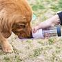 ~芳之香戀香氛館~ 寵物外出可伸縮設計 防漏便攜式寵物水杯 寵物戶外隨行杯 寵物飲水器 寵物喝水器