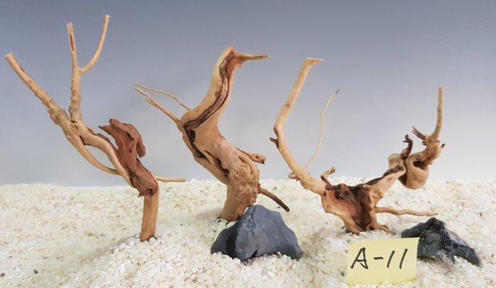 A11水草造景 苔蘚微景觀 杜鵑根 水族 水草造景 莫絲樹 天然沈木 流木 魚缸 黃金流木 造景 爬蟲 兩棲爬蟲箱