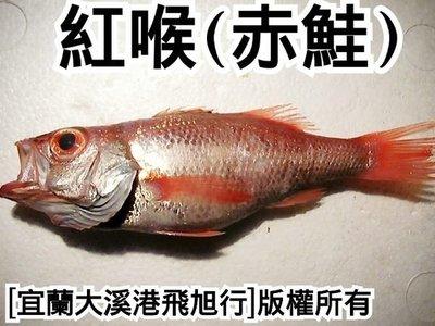 紅喉魚(赤鮭)....長年推薦對象
