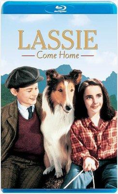 【藍光電影】靈犬萊西 / LASSIE COME HOME (1943)