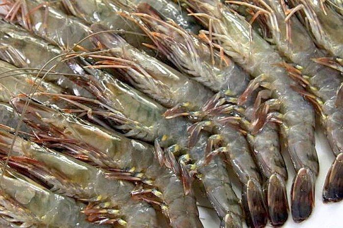 【萬象極品】草蝦16尾/約300g±10%~殼薄肉多~肉質鮮美結實~口感一流~