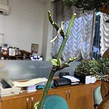植物催芽劑5g. X2