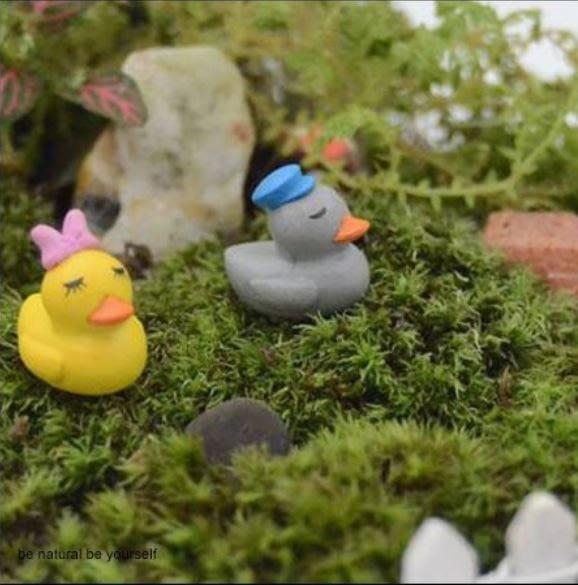 Miss Q (現貨)【M-8005-A118】 園藝組盆小物~迷你情侶鴨