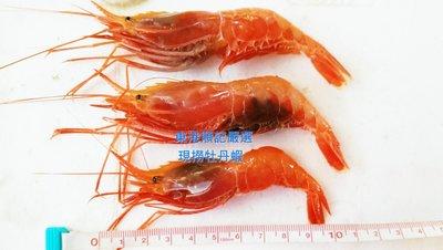 東港順記嚴選 魚船當日現撈 牡丹蝦 (刺蝦)  需預購