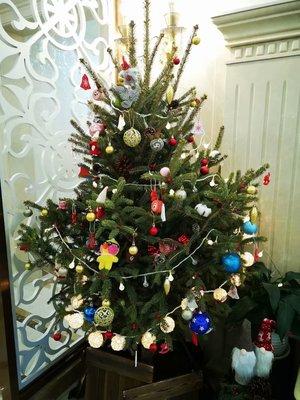 天然鮮活真的聖誕樹真樹帶根青扦云杉諾貝松聖誕節裝飾聖誕樹盆栽