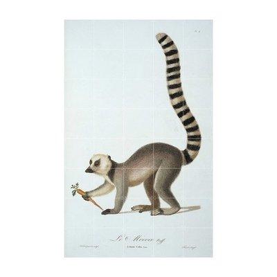【荷蘭 IXXI 】Ring tailed Lemur 環尾狐猴-壁掛畫 壁畫掛飾 壁貼 海報 牆面裝飾藝術