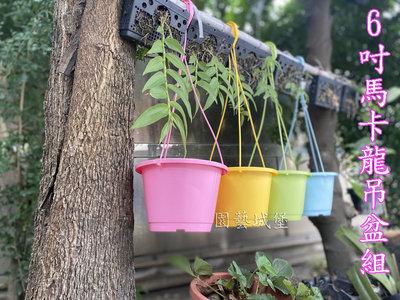 【園藝城堡】 6吋馬卡龍吊盆組 6寸彩色吊盆  塑膠花盆 圓盆 塑膠盆 菜色盆 6吋盆
