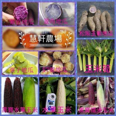 地瓜中顆5斤+玉米筍5斤(隨機選或指定都可以)+含運費只賣550元 (雲林縣慧軒農場)