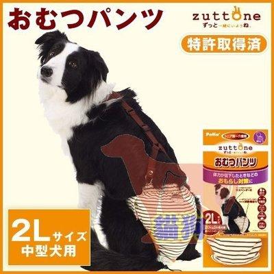 **貓狗大王**日本PETIO《老犬尿失禁用尿布褲-2L號》尿褲可重複使用