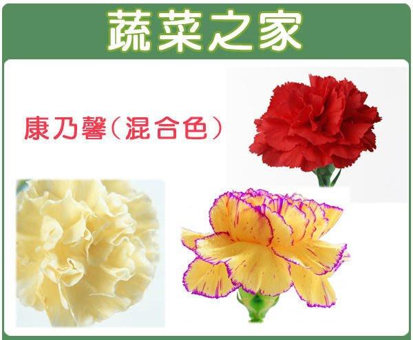 【蔬菜之家】H33.康乃馨種子30顆(混合色,高40~55cm.花卉種子)