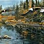 美國進口拼圖 sun 風景 河邊的老鷹.1000片...