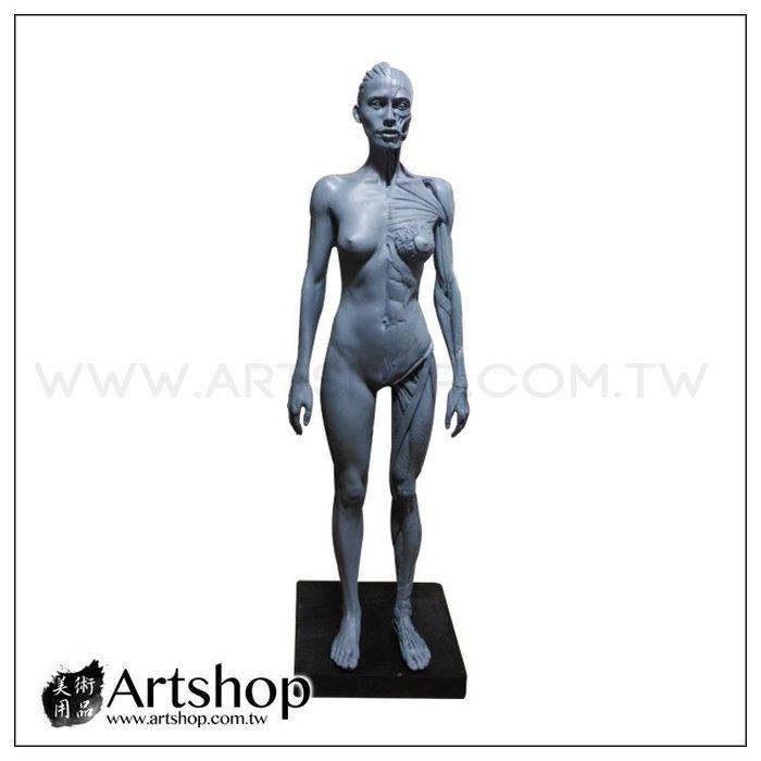 【Artshop美術用品】藝用人體解剖模型 1:6 女性素體 皮膚+肌肉 (灰色)