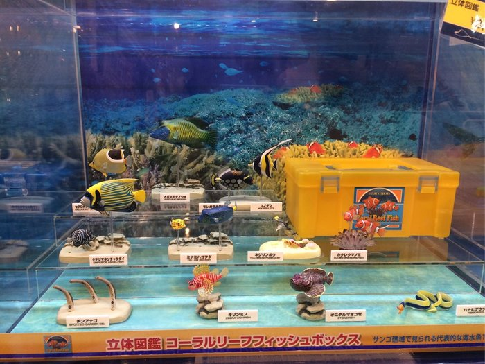 沖繩 海洋博公園 美麗海水族館 小丑魚 珊瑚礁 立體圖鑑 紀念 日本空運#5534~小太陽日本精品