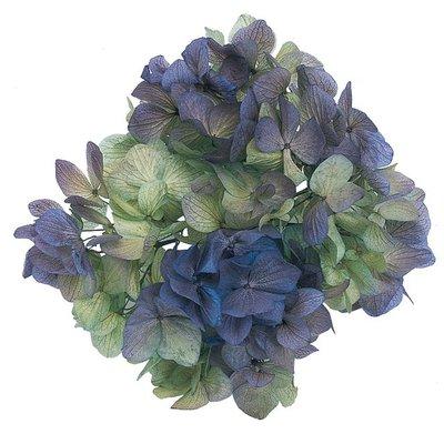 ღ萊姆森林【Preserved 藍+綠雙色繡球(1盒)】現貨【DT064142】