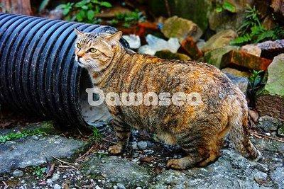 想租多少價格.你決定專案.貓咪.台灣圖庫.照片.圖片.風景.影像168MB超級大檔