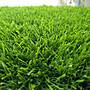 *二十五年老字號人工草專業*2.5CM漂亮又很天然人工草皮,庭院優惠便宜賣90cmx90cm一塊