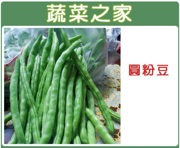 【蔬菜之家】E06.圓粉豆種子60顆(又稱醜豆.壞豆,白花,豆莢略呈圓形,肉厚柔軟,易凹凸變形.蔬菜種子)