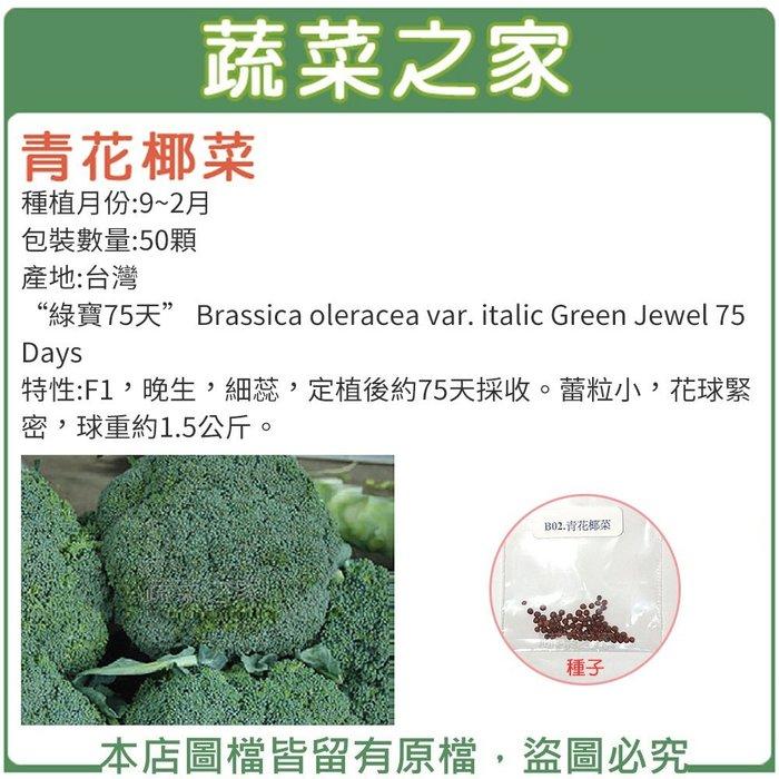 【蔬菜之家】B02.青花椰菜種子50顆(F1,晚生,細蕊,定植後約75天採收.蔬菜種子)