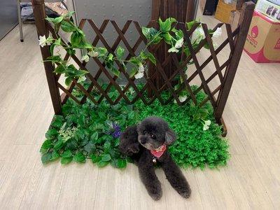燻木圍籬防蛀蟲(可調寬窄) 植物架 花...