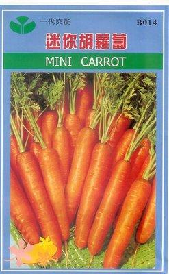 ~大包裝蔬菜種子~迷你胡蘿蔔~最 家庭種植,特別 !