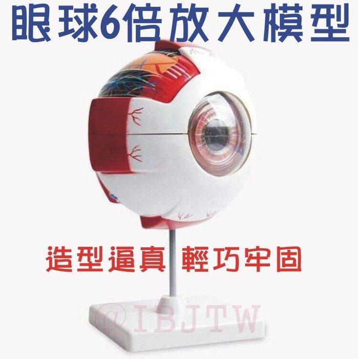 【奇滿來】眼球模型 6倍放大 眼睛眼科 角膜虹膜 晶狀體玻璃體 解剖 醫生護士護理師 醫用教學示範用具 ARAQ