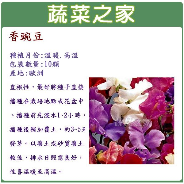 【蔬菜之家】H42.香豌豆種子(混合色)10顆(花卉種子.混合色,直根性,性喜溫暖至高溫)