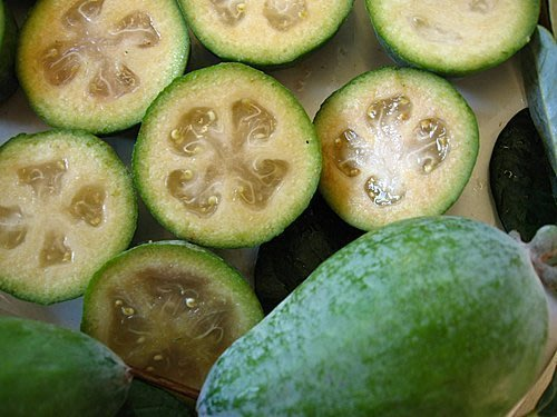 ╭*田尾玫瑰園*╯ 水果苗-鳳梨番石榴-30cm300元-Feijoa味道是酸甜裡帶點香氣