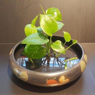 【星辰陶藝】 (不含植物配件) 海草魚淺盤,插花,花器,流水配件