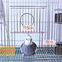 一尺半白鐵鳥籠+木棍+壓克力牡丹、九官杯+塑膠便盤/羽翔寵物鳥園