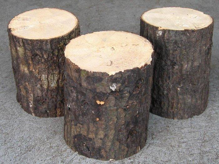 【虫話森林】優質國產優質產卵木【L】(甲蟲,鍬形蟲、昆蟲、獨角仙)