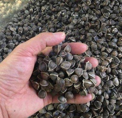 正品非洲印度特級辣木籽 天然綠色無添加劑 500g裝 保存期限36個月 送禮 家中常備