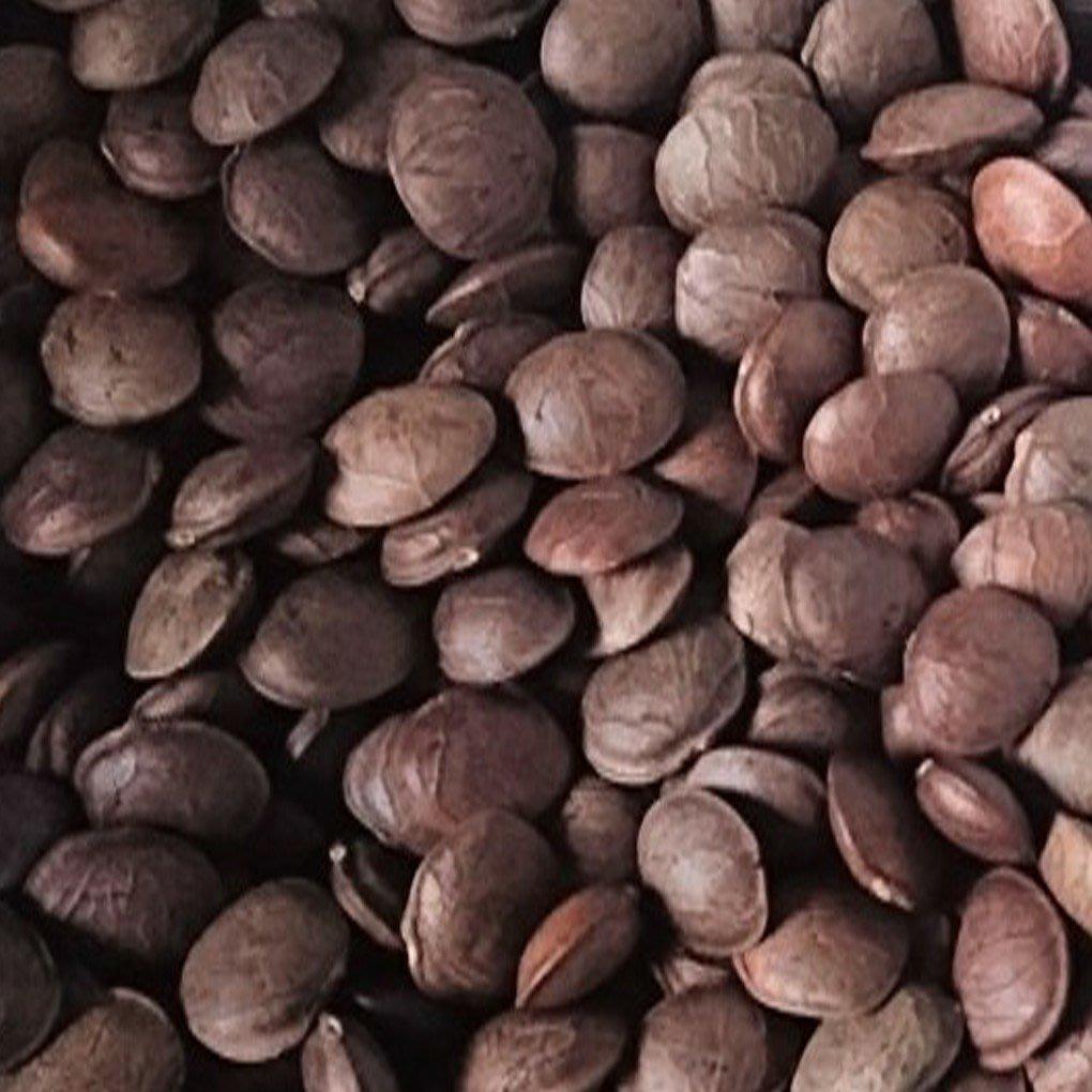 印加果種子(一公斤)(免運費)