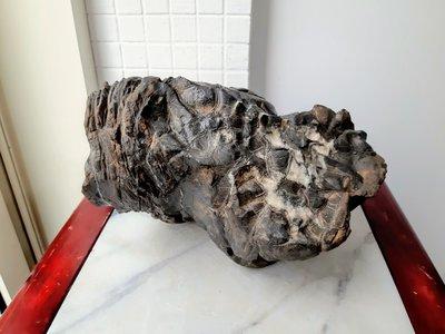 黑龜甲石1