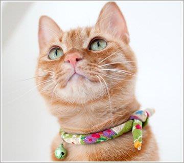 ∞玻露卡朵∞ iCat 日本製 單結和風貓項圈 輕量化 人氣商品! 花星Collar ∞Polka Dot∞ Japan